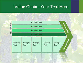 Ripening grape PowerPoint Template - Slide 27