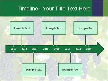 Ripening grape PowerPoint Template - Slide 28