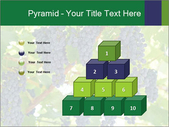 Ripening grape PowerPoint Template - Slide 31