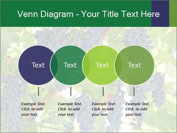 Ripening grape PowerPoint Template - Slide 32