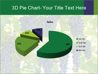 Ripening grape PowerPoint Template - Slide 35