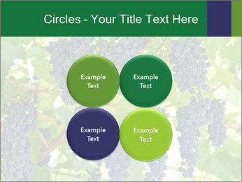 Ripening grape PowerPoint Template - Slide 38