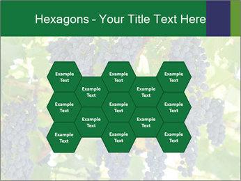 Ripening grape PowerPoint Template - Slide 44
