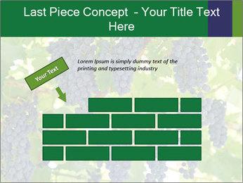Ripening grape PowerPoint Template - Slide 46