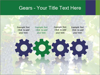 Ripening grape PowerPoint Template - Slide 48
