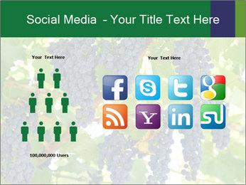 Ripening grape PowerPoint Template - Slide 5