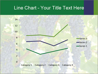 Ripening grape PowerPoint Template - Slide 54