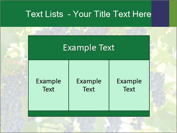 Ripening grape PowerPoint Template - Slide 59