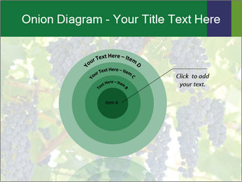 Ripening grape PowerPoint Template - Slide 61
