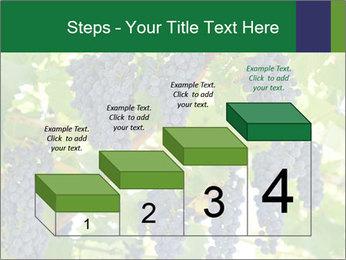 Ripening grape PowerPoint Template - Slide 64