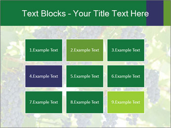Ripening grape PowerPoint Templates - Slide 68