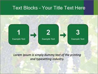 Ripening grape PowerPoint Template - Slide 71