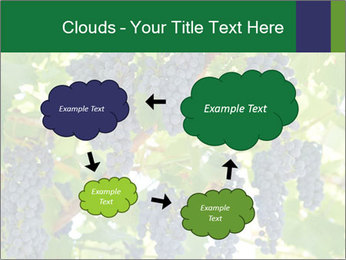 Ripening grape PowerPoint Template - Slide 72