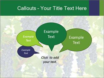 Ripening grape PowerPoint Template - Slide 73