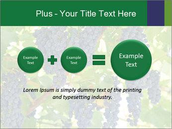 Ripening grape PowerPoint Template - Slide 75