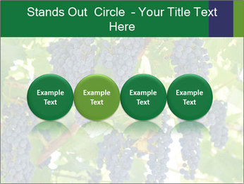Ripening grape PowerPoint Template - Slide 76