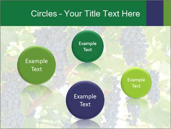 Ripening grape PowerPoint Template - Slide 77