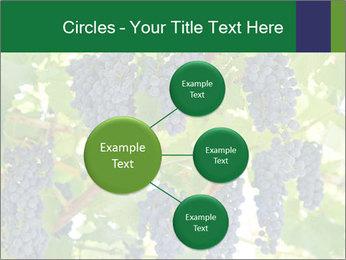 Ripening grape PowerPoint Templates - Slide 79