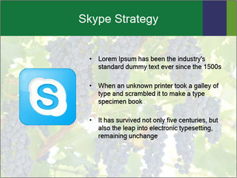 Ripening grape PowerPoint Template - Slide 8