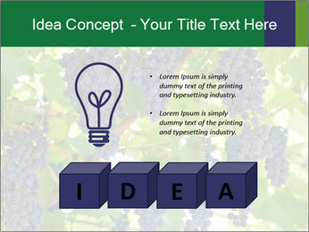 Ripening grape PowerPoint Template - Slide 80