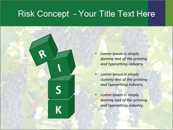 Ripening grape PowerPoint Template - Slide 81