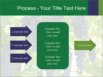 Ripening grape PowerPoint Template - Slide 85