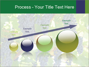 Ripening grape PowerPoint Template - Slide 87