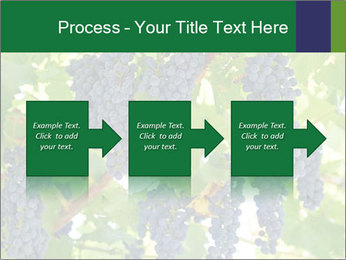 Ripening grape PowerPoint Template - Slide 88