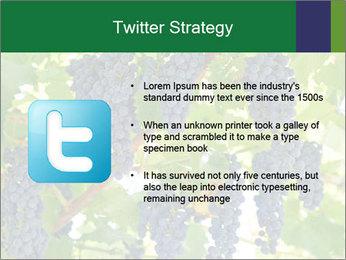 Ripening grape PowerPoint Template - Slide 9
