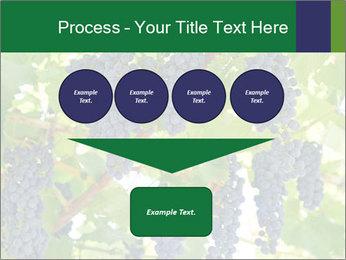 Ripening grape PowerPoint Template - Slide 93