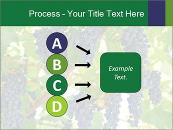 Ripening grape PowerPoint Template - Slide 94