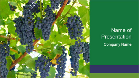 Ripening grape PowerPoint Template