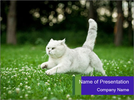 British short hair cat PowerPoint Templates