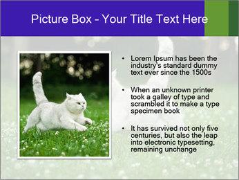 British short hair cat PowerPoint Templates - Slide 13