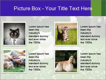 British short hair cat PowerPoint Templates - Slide 14