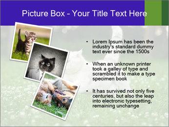 British short hair cat PowerPoint Templates - Slide 17