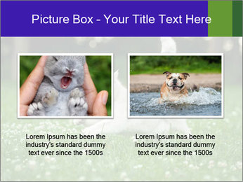 British short hair cat PowerPoint Templates - Slide 18