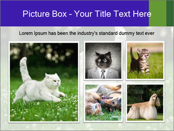 British short hair cat PowerPoint Templates - Slide 19