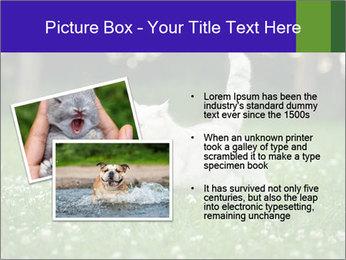 British short hair cat PowerPoint Templates - Slide 20