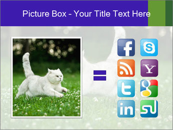 British short hair cat PowerPoint Templates - Slide 21