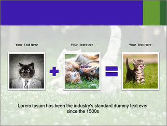 British short hair cat PowerPoint Templates - Slide 22
