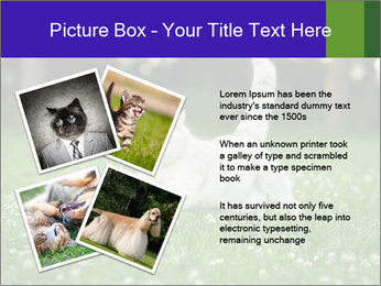 British short hair cat PowerPoint Templates - Slide 23