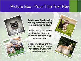 British short hair cat PowerPoint Templates - Slide 24