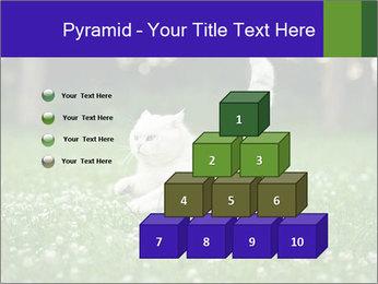 British short hair cat PowerPoint Templates - Slide 31
