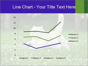 British short hair cat PowerPoint Templates - Slide 54