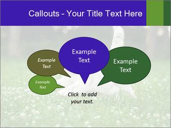 British short hair cat PowerPoint Templates - Slide 73