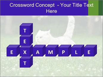 British short hair cat PowerPoint Templates - Slide 82