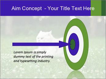 British short hair cat PowerPoint Templates - Slide 83