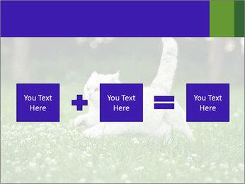 British short hair cat PowerPoint Templates - Slide 95