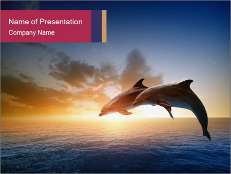 Couple jumping dolphins PowerPoint Template